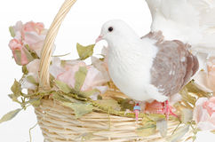 Dove on a basket. White dove is alight n a wedding basket with flowers Royalty Free Stock Photo