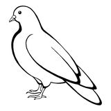 Dove bird black white  sketch illustration. Vector Stock Images