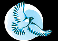 Dove or bird in flight Stock Photos