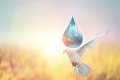 Dove Bird holding the world Stock Images