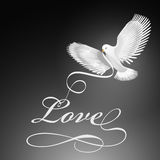 Dove bird of love Stock Images