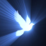 Dove bird peaceful light flare Royalty Free Stock Photos