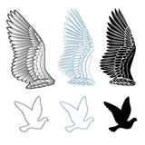 Dove bird wings set Stock Photography