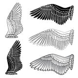 Dove bird wings set Stock Images