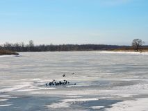 River Skirvyte and birds in winter, Lithuania Stock Photography