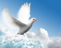 Dove in cloud sky Royalty Free Stock Photography