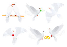 Dove Collection Royalty Free Stock Photo