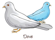 Dove, Color Illustration Stock Image