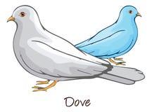 Dove, Color Illustration Stock Image