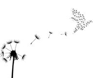 Dove and dandelion Stock Images