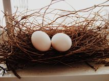 Dove egg in the nest Stock Photography