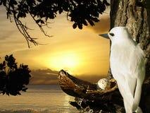 Dove, egg on sunrise nest. Dove is sitting on the nest wit egg. Sunrise sky is on background Stock Images