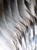 Dove feathers Royalty Free Stock Images