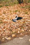 The dove flies in the park Royalty Free Stock Photography