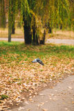 The dove flies in the park Royalty Free Stock Photo