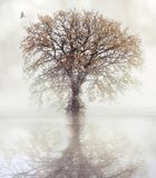 A dove flies towards an autumn tree. That is reflected in the water royalty free stock photos
