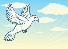 Dove in flight against a bright blue sky Stock Image