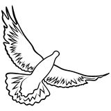 Dove in flight Royalty Free Stock Images