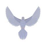 Dove flying bird vector illustration. Stock Image