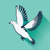 Dove flying flat Stock Image