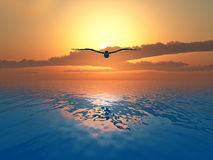 Dove. Flying over the sea on sunset background stock photo
