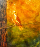 Dove in the forest. painting and postproduction  Royalty Free Stock Images