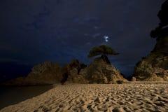 Dove gli alberi si sviluppano Fotografia Stock Libera da Diritti