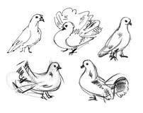 Dove. Hand-drawn Stock Photo