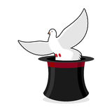 Dove and hat magician. Black cylinder illusionist and a white pi Royalty Free Stock Images