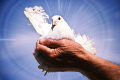 Dove holy spirit Stock Photo