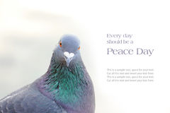 Dove or homing pigeon, sample text message Stock Photos