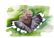 Dove illustration. On a green background Watercolor. Hand drawn Royalty Free Stock Photography
