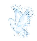Dove isolated Royalty Free Stock Photos
