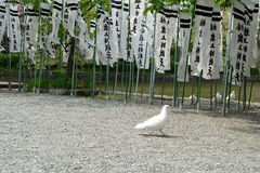 A dove in Kamakura Stock Photos