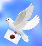Dove with letter Stock Images