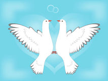 Dove and love Royalty Free Stock Image