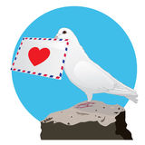The Dove with a love letter Stock Photos