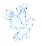 Dove made out of water splashes Royalty Free Stock Photo