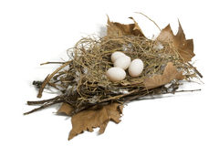 Dove nest. And eggs on a white background royalty free stock photography