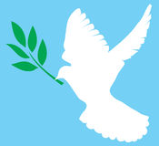 Dove with olive. Illustration of a dove with olive branch Stock Photo