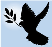 Dove with olive stock photography