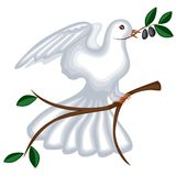 The dove with olive branch Stock Image