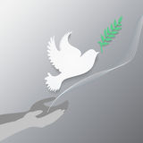 Dove with olive branch Stock Images