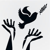 Dove with olive branch Stock Photo