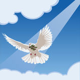 Dove with olive branch. Vector dove with olive branch stock illustration