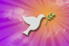Dove with olive leaf Stock Photos