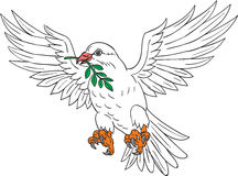 Dove With Olive Leaf Drawing Stock Photo