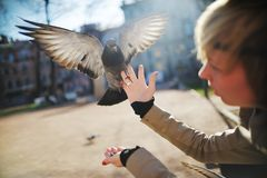 Dove with open wings sits on the girl's hand. Dove with open wings sits on the blonde girl's hand Royalty Free Stock Photo