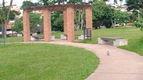 A dove in the park. A dove walks in a park located in Presidente Prudente - southeast Brazil royalty free stock photos