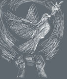 Dove of peace. Pencil drawing - dove of peace Stock Images
